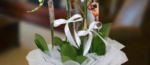 Masum ve Asil Güzellik, Orkide