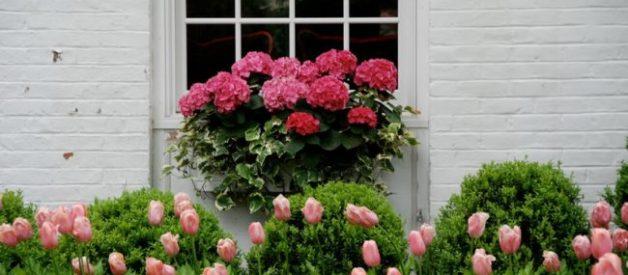 Pencere Kenarlarını Süsleyecek Muhteşem Çiçekler